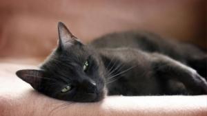 Лечение кошек