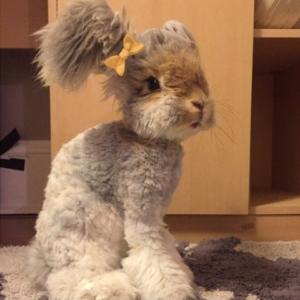 Стрижка кроликов