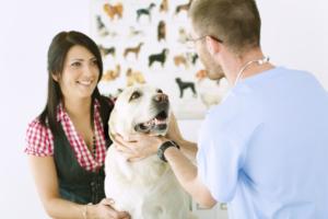 Наши ветеринары