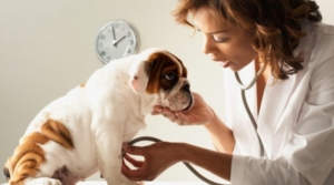 Veterinary-Clinic-Your-Dog-800x445