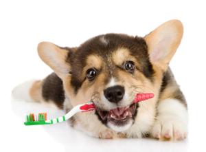 Чистка зубов у собак