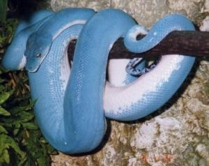 Лечение змей