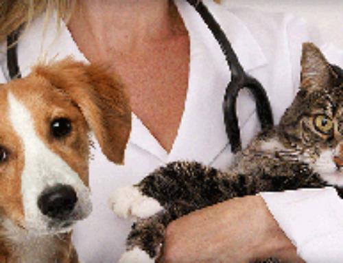 Диагностика состояния животных на дому