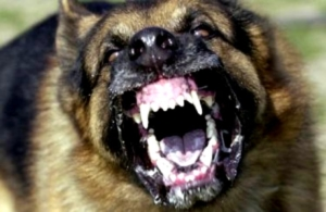 Бешенство у собак – признаки, течение болезни, диагностика, лечение и профилактика